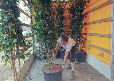 vykládka rostlin a keřů dawyck